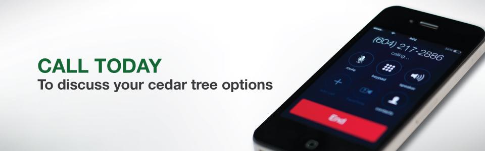 buy cedar trees fraser valley