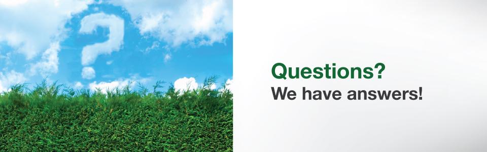 cedar bush trimming, cedar planting, cedar hedge spacing, cedar hedges vancouver, cedar trees, cedar trees for sale, cedar tree installation