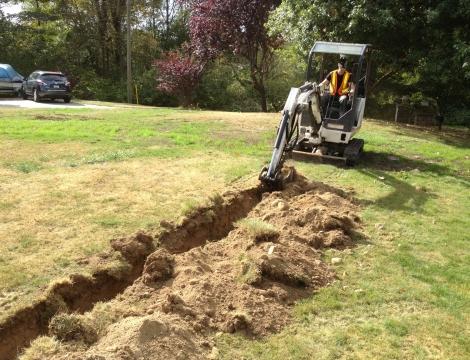 bobcat tree planting