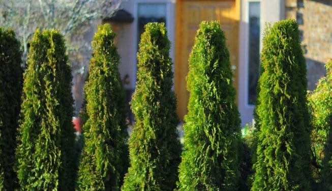 Fraser valley cedar hedges vancouver compare