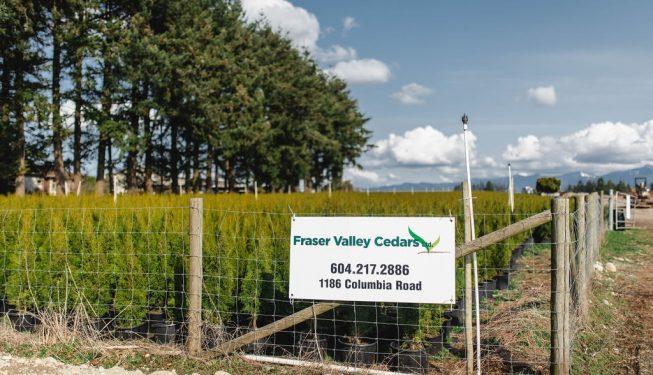 FVC fraser vallley cedars 037 trees vancouver