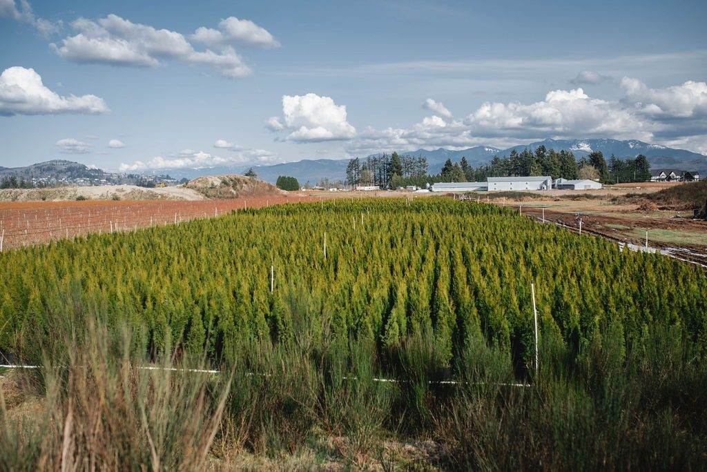 FVC fraser vallley cedars 046 trees vancouver