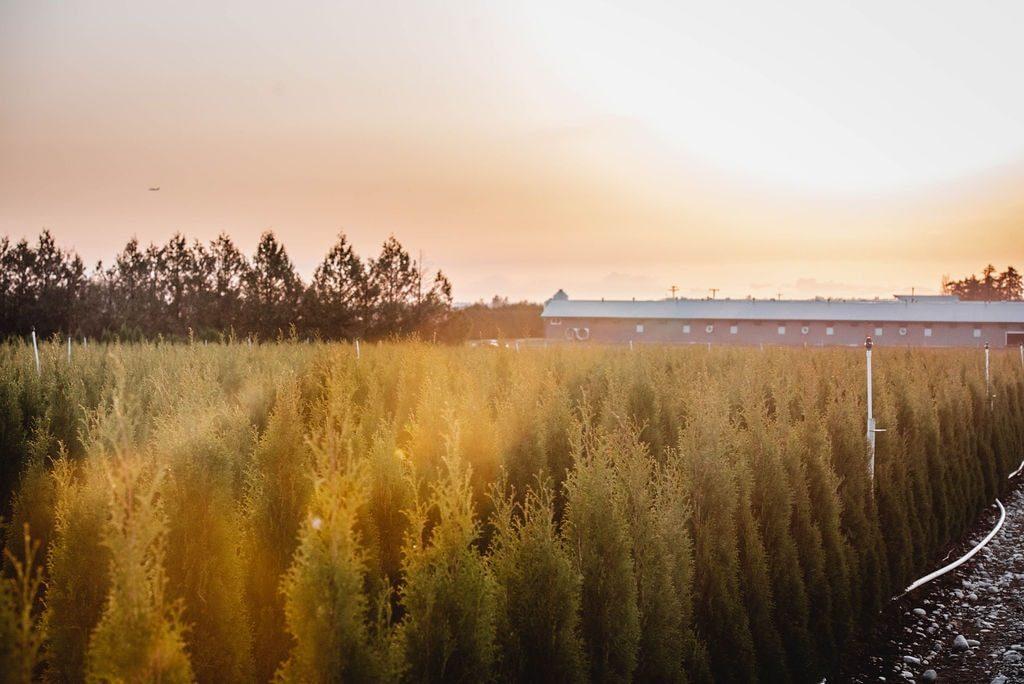 FVC fraser vallley cedars 068 trees vancouver