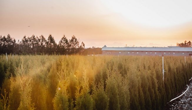 FVC fraser vallley cedars 068 trees Coquitlam