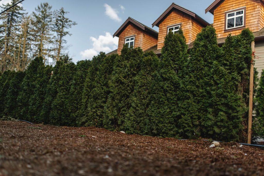 FVC fraser vallley cedars 075 trees vancouver