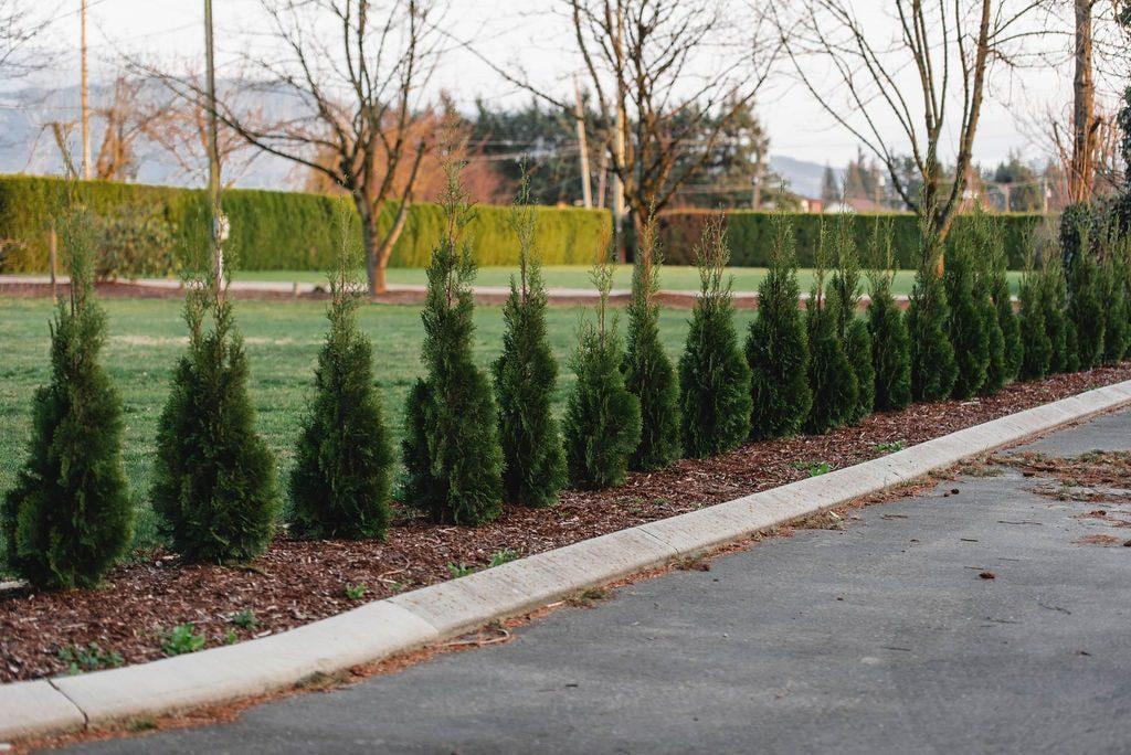 FVC fraser vallley cedars 077 trees vancouver