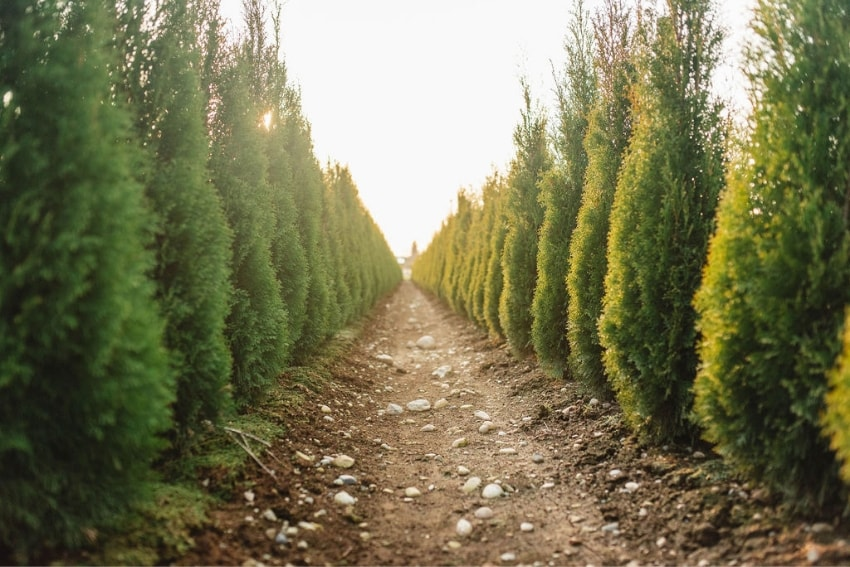 Fraser Valley Cedars Our Fields